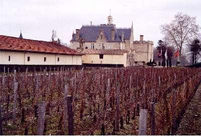 Les vignes du château Pape-Clément